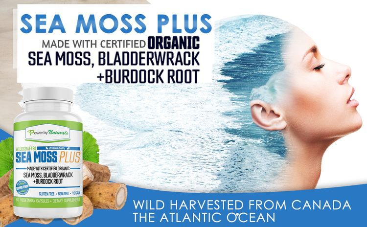 ALL NATURAL HERBS SUPERFOOD SUPPLEMENT BLEND with Organic Sea Moss Bladderwrack and burdock root
