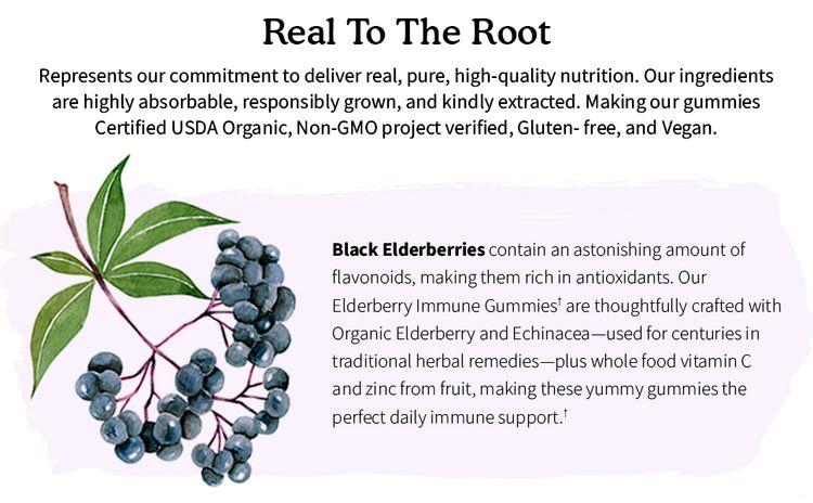 elderberry ingredient highlight